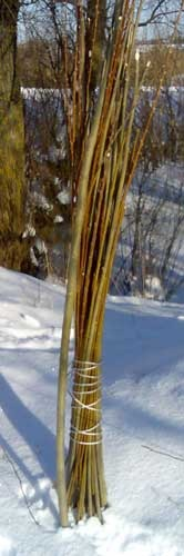 Collecting willows in winter